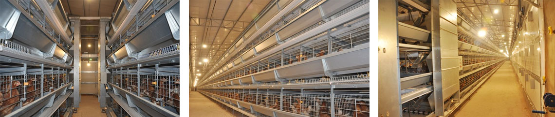 Livi Machinery - professional poultry farming equipment manufacturer