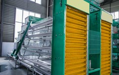 Automatic layer  rearing equipment
